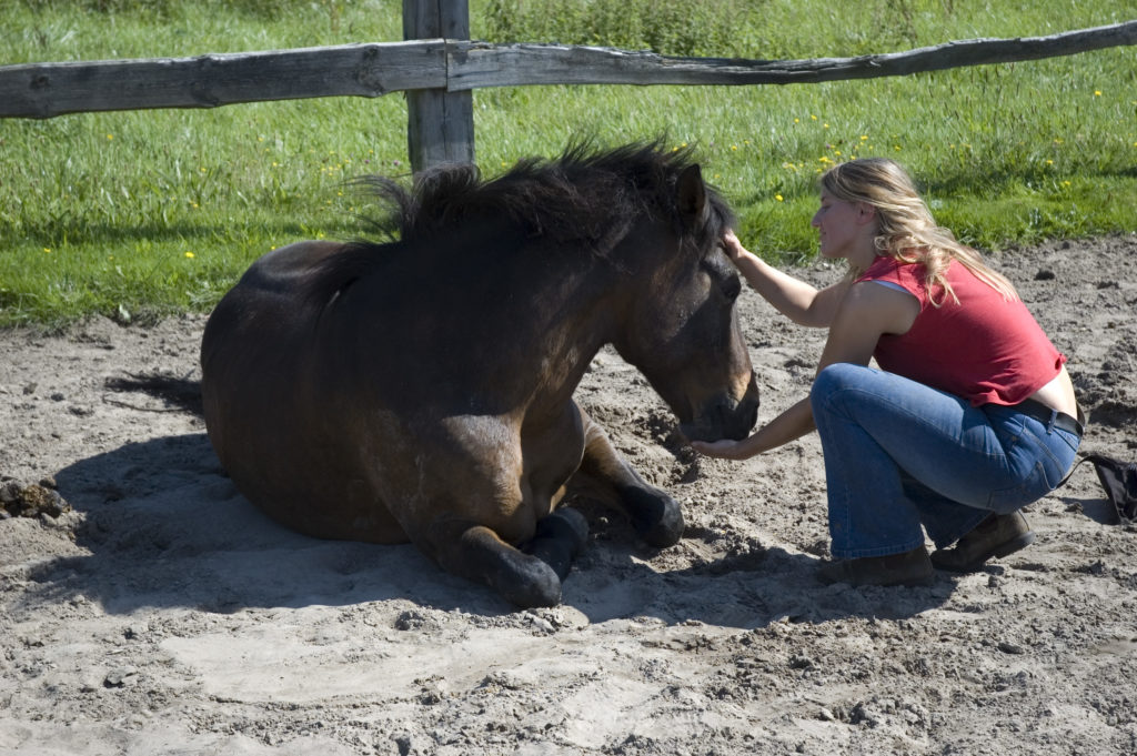 Unterricht Training Und Ausbildung Von Menschen Mit Pferden Input